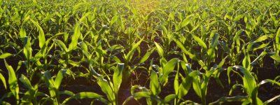 שיפוי קרקע חקלאית